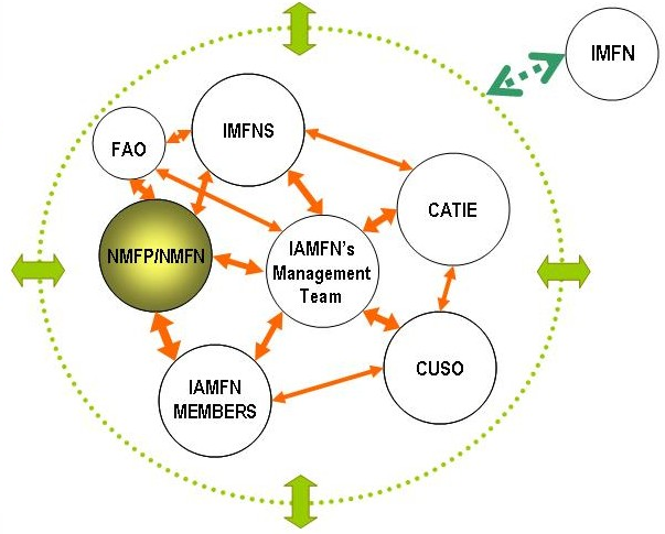 Figure 4. The NMFP/NMFN within the IAMFN's organizational structure.